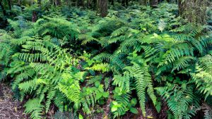 28 Different Types of Ferns