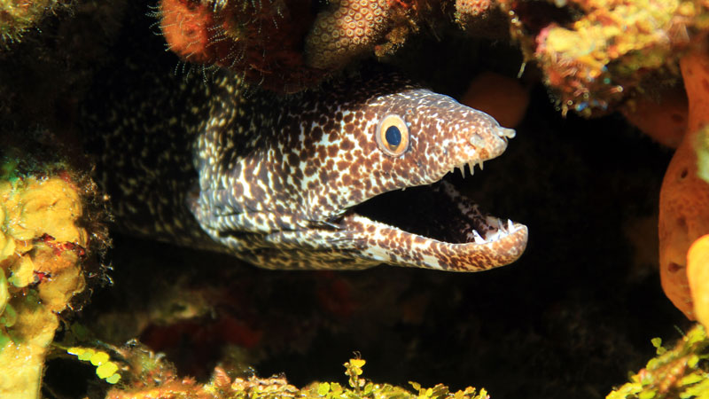 types of eels