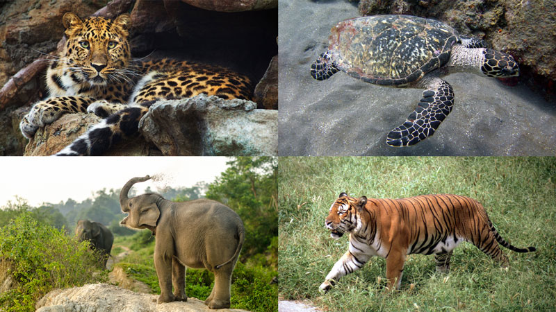 types of endangered animals